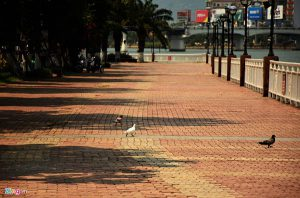 Vỉa hè lát gạch block tự chèn đường Bạch Đằng ở Đà Nẵng vẫn đẹp sau 20 năm. Nguồn: Zing.vn